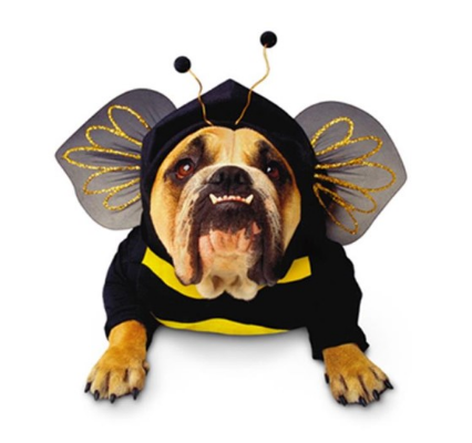 Bumble Bee Dog